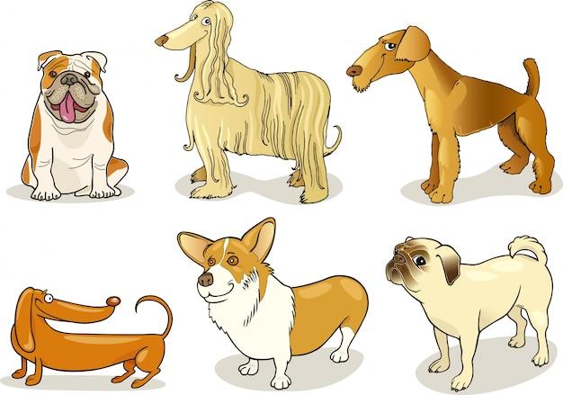 Cães de raça pura