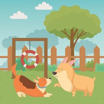 Cães desenhos animados desenha illustrator vector