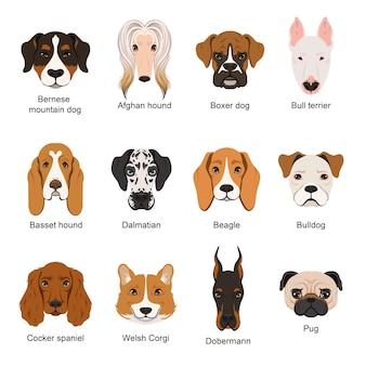 Cães diferentes