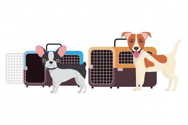 Cães e caixas de transporte para animais de estimação em branco