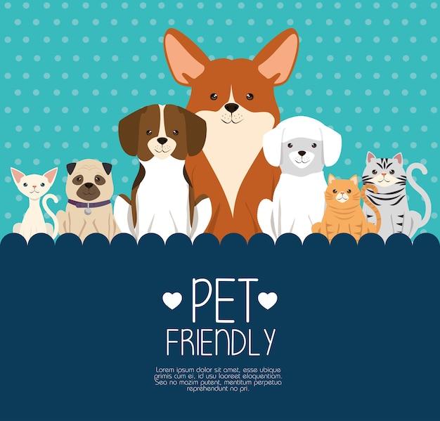 Cães e gatos animais domésticos amigáveis