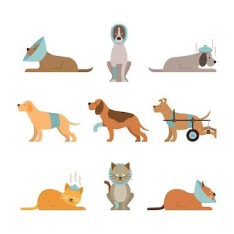 Cães e gatos ficam doentes, feridos, feridos, feridos, mortos