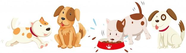 Cães em diferentes ações