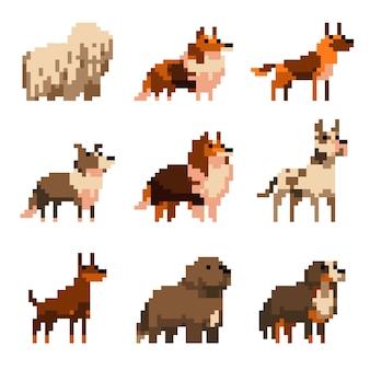 Cães fofos de pixel art com ilustração isolada