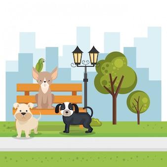 Cães fofos na cena do parque
