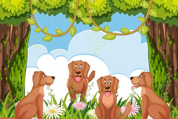 Cães na cena da floresta