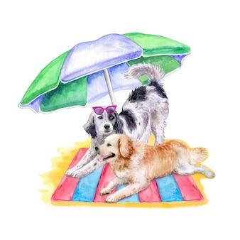 Cães setter inglês e labrador retriver deitado na praia. ilustração em aquarela
