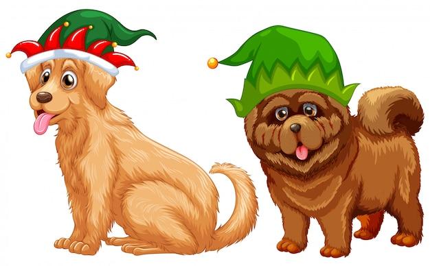 Cães vestindo chapéu de bobo da corte