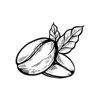 Café em grão desenhado à mão retrô