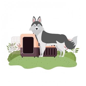 Caixa de transporte para cães e animais de estimação com paisagem