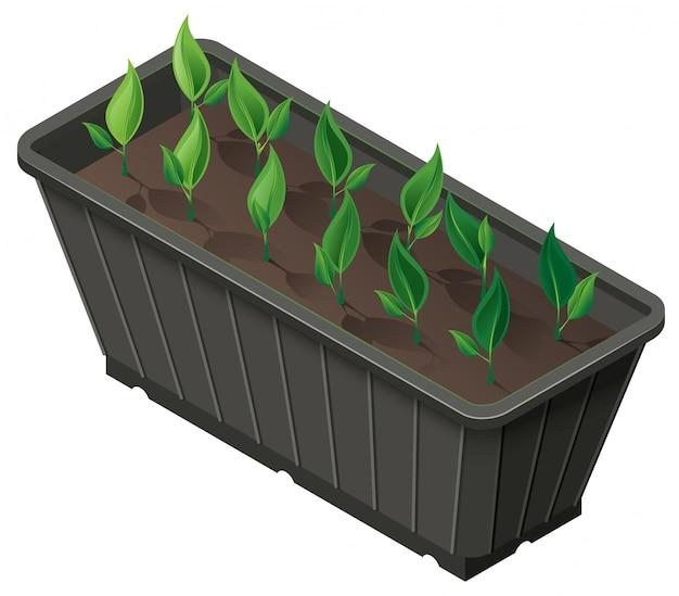 Caixa isométrica com brotos de plantas verdes de mudas