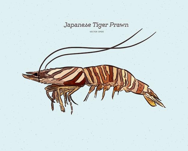 Camarão tigre japonês, esboço de desenho de mão