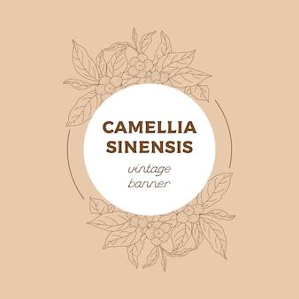 Camellia sinensis banner vintage. perfumaria, cosmética e planta médica. mão ilustrações desenhadas.