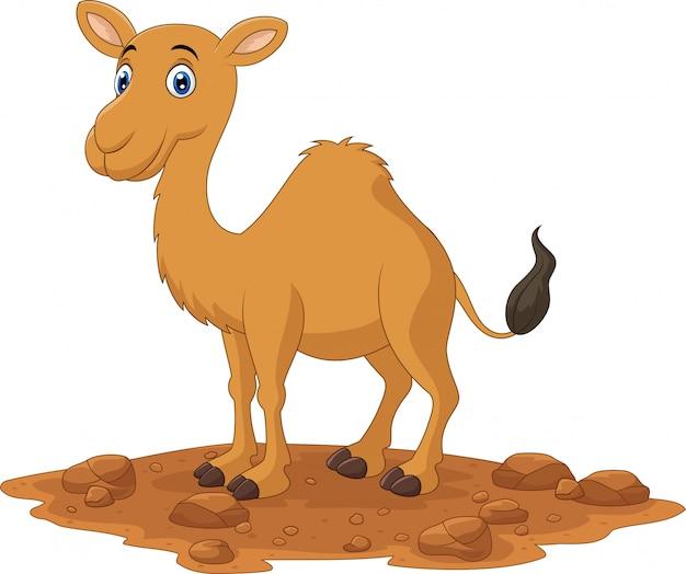 Camelo de desenhos animados, isolado no fundo branco