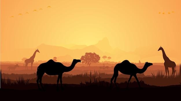 Camelo na floresta