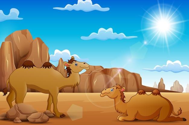 Camelos dos desenhos animados que vivem no deserto