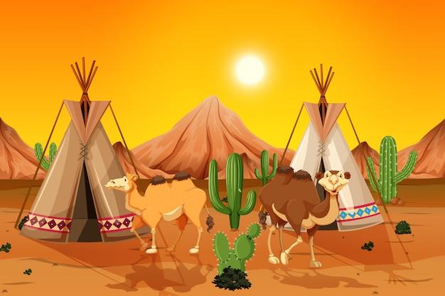 Camelos e tenda no deserto