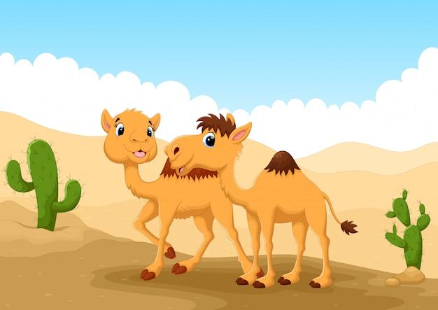 Camelos no deserto
