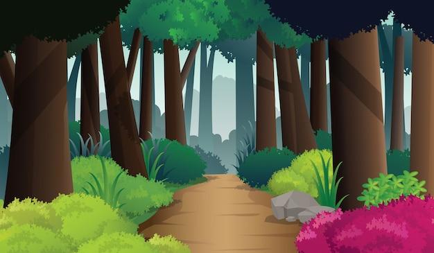 Caminho do caminho da floresta densa