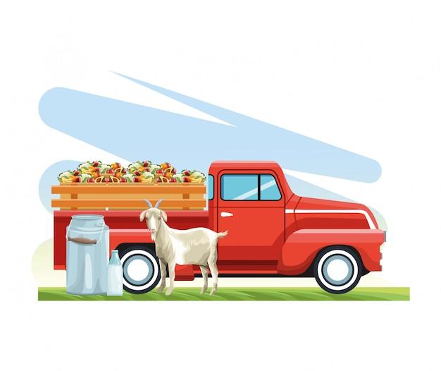 Camionete agrícola com frutas e legumes cabra e vasilha de leite