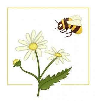 Camomila colorida com abelha.
