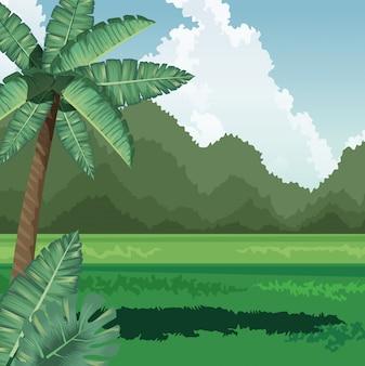 Campo de coco palmeira tropical deixa montanhas