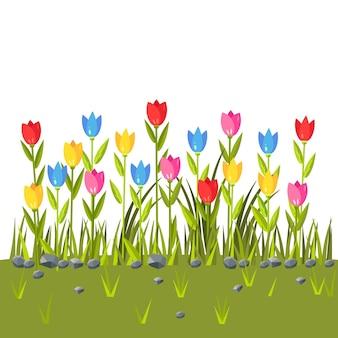 Campo de flores com tulipas coloridas. fronteira de grama verde. cena de primavera