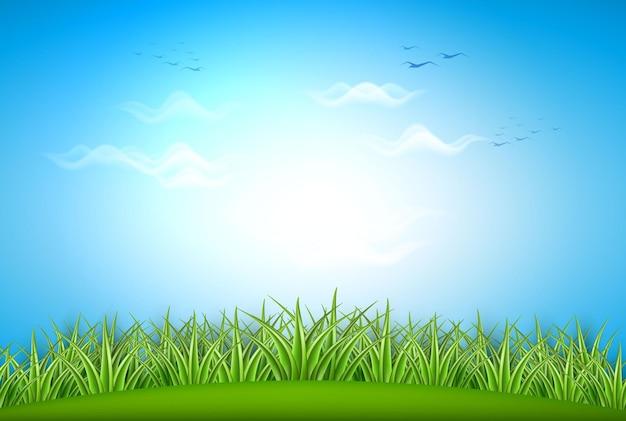 Campo de pasto de grama verde realista sobre fundo de céu de verão com nuvens azuis