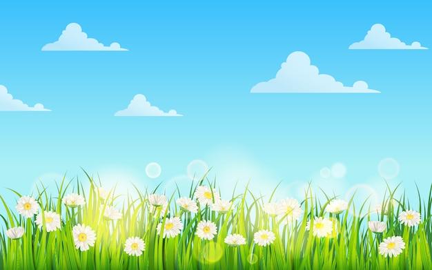 Campo de primavera de flores de margaridas, camomila e verde grama suculenta, prado, céu azul, nuvens brancas