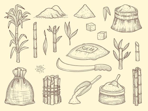 Cana de açúcar. crescimento, culturas saudáveis, plantas, colheitas, cana-de-açúcar, alimentos, ingredientes, esboço, coleção. cultivo de cana-de-açúcar botânica, ilustração de caule doce