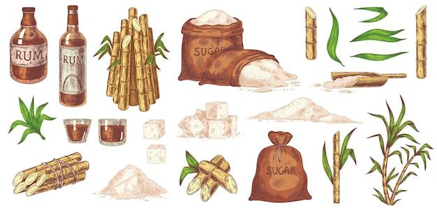 Cana de açúcar e rum desenhados à mão