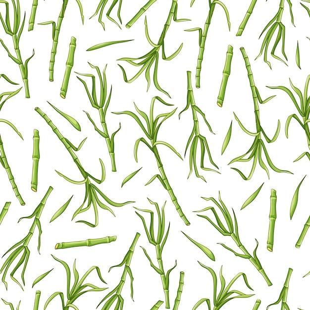 Cana-de-açúcar verde sobre um padrão de fundo branco sem costura. fundo do vetor.