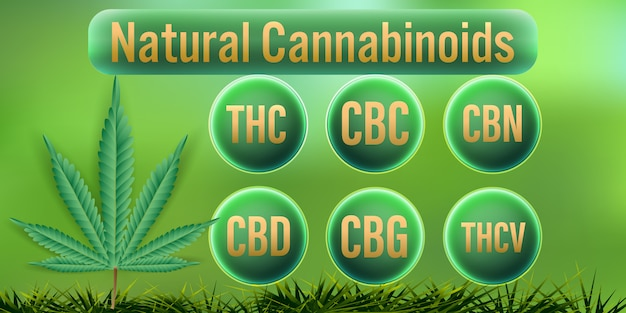 Canabinóides naturais em cannabis.