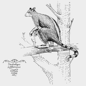 Canguru de árvore gravado, ilustração desenhada à mão em estilo xilogravura