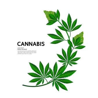 Cannabis para uso médico.