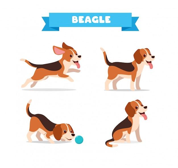 Cão beagle fofo animal de estimação com conjunto de feixe de muitas poses