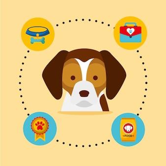 Cão beagle medalha veterinária kit tigela