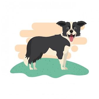 Cão bonito border collie em branco