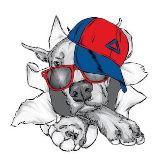 Cão bonito de boné e óculos.