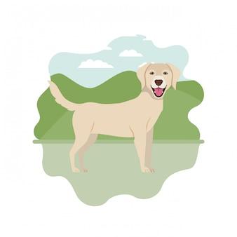 Cão bonito labrador retriever em branco