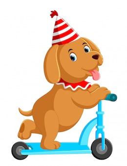 Cão bonito na scooter