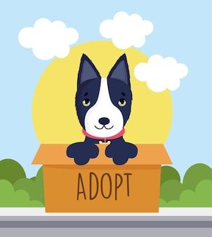 Cão bull terrier de adoção
