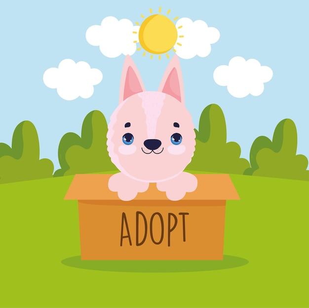 Cão de adoção dentro da caixa