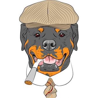 Cão de hipster engraçado dos desenhos animados rottweiler