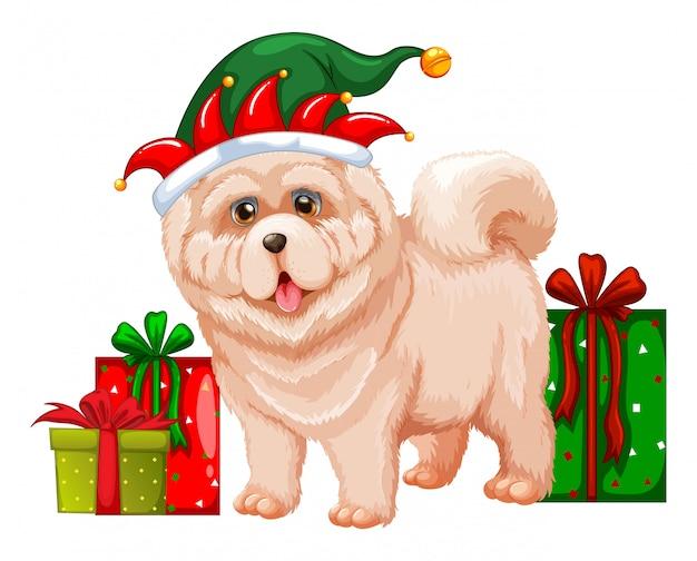 Cão, desgastar, elfo, chapéu