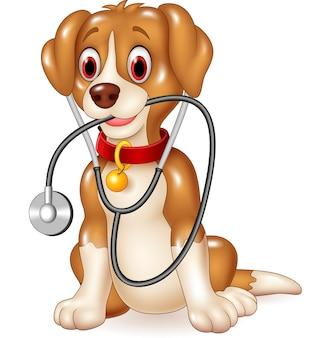 Cão engraçado dos desenhos animados, sentado com estetoscópio