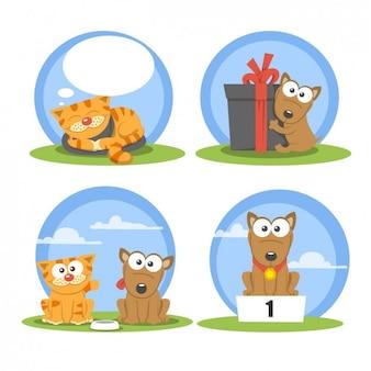 Cão engraçado e pacote de gato
