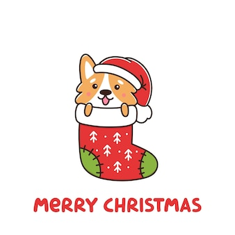 Cão engraçado raça galês corgi como um presente em meia de natal