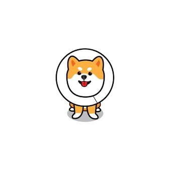 Cão engraçado usando coleira elizabethan