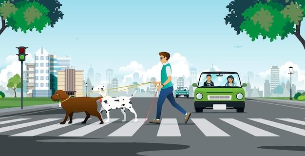 Cão-guia para um cego na faixa de pedestres.